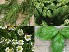 Small aromatic herb bundle