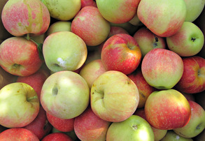 Display bushel of gala apples