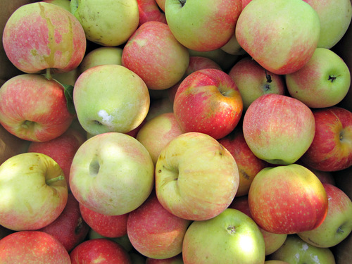 Bushel of Gala apples
