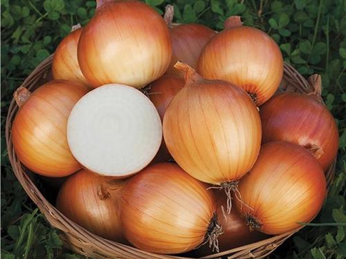 New York Early Onion
