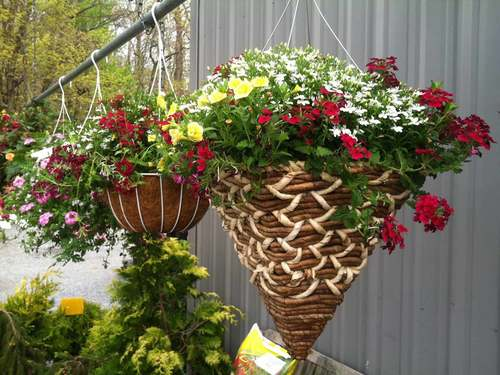 "10"" Hanging Basket-Assorted flowers"