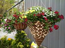 Small hanging basket assorted flowers